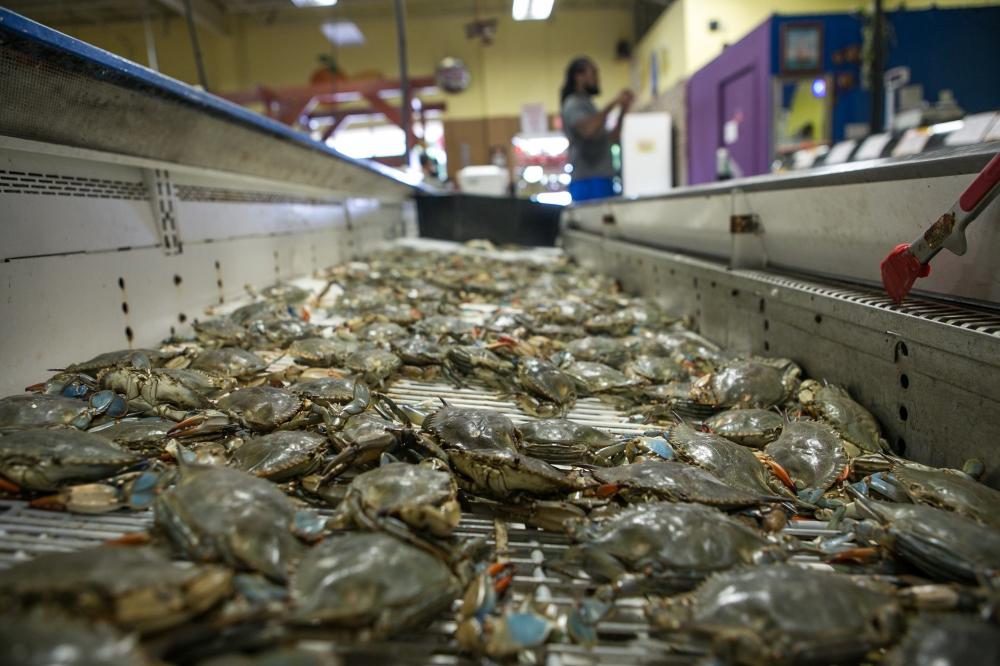 Stiles Farmers Market Crabs.jpg