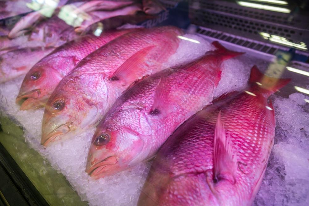 Stiles Farmers Market Fish.jpg